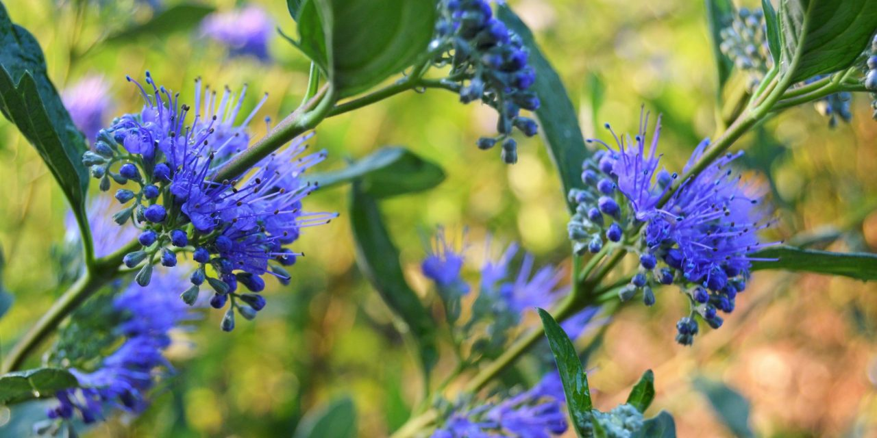 7 Flowers Shrubs That Are Perfect For Your Garden
