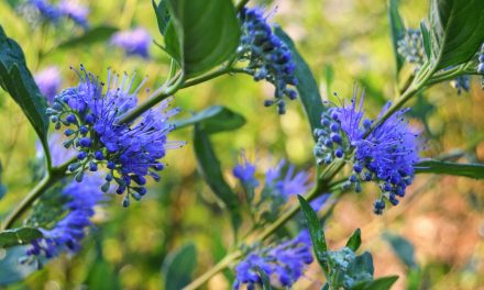 7 Flowering Shrubs That Are Perfect For Your Garden