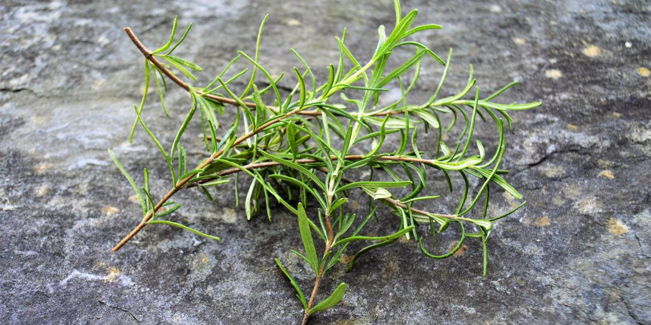 Garden Recipe – Herb Infused Olive Oil