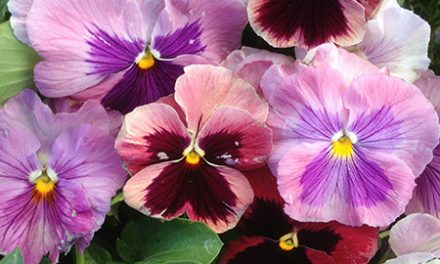 Fall Annuals To Brighten Your Garden
