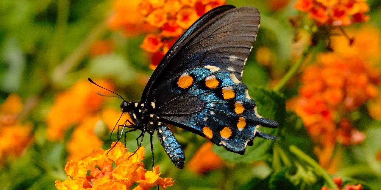 8 Plants For Attracting Butterflies To Your Garden