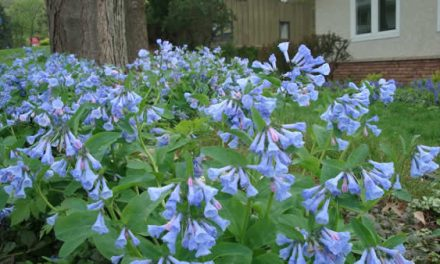 Our Favorite Native Plants
