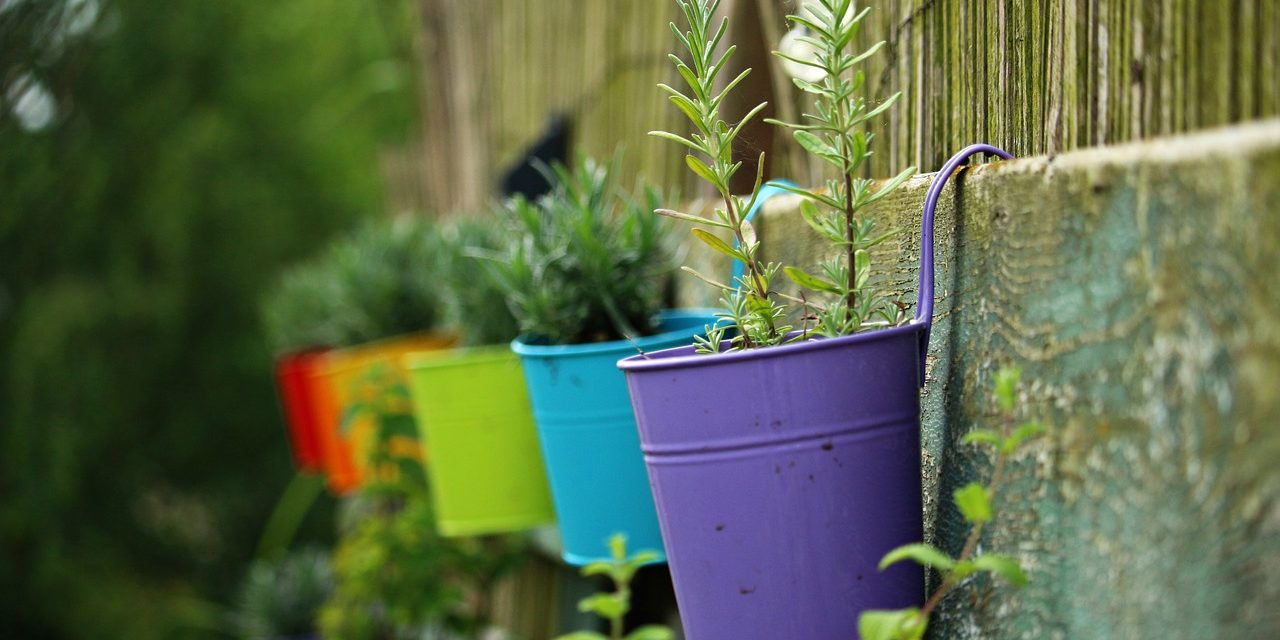 Top 9 Container Gardening Tips