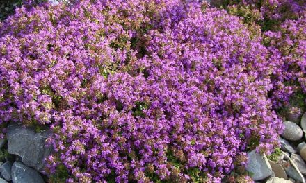 The Low Down On Living Groundcovers