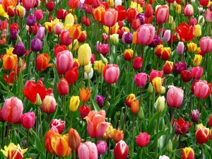 How And When To Plant Spring Bulbs
