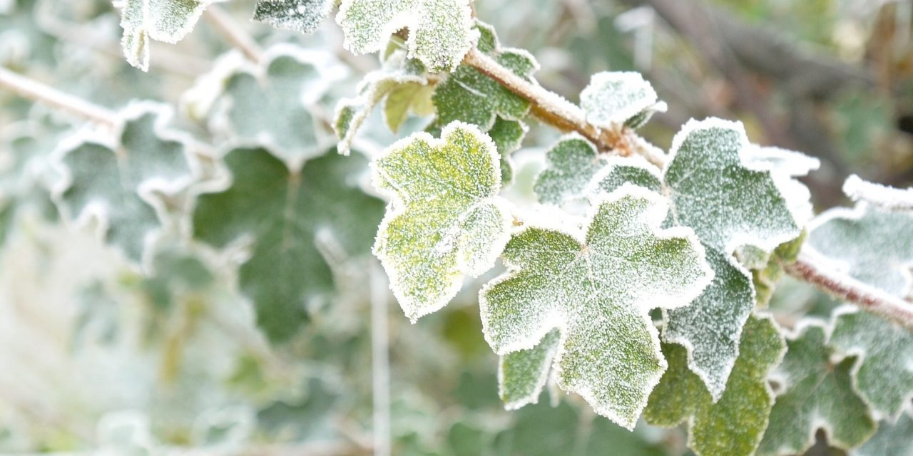 How To Protect Your Plants In Cold Weather