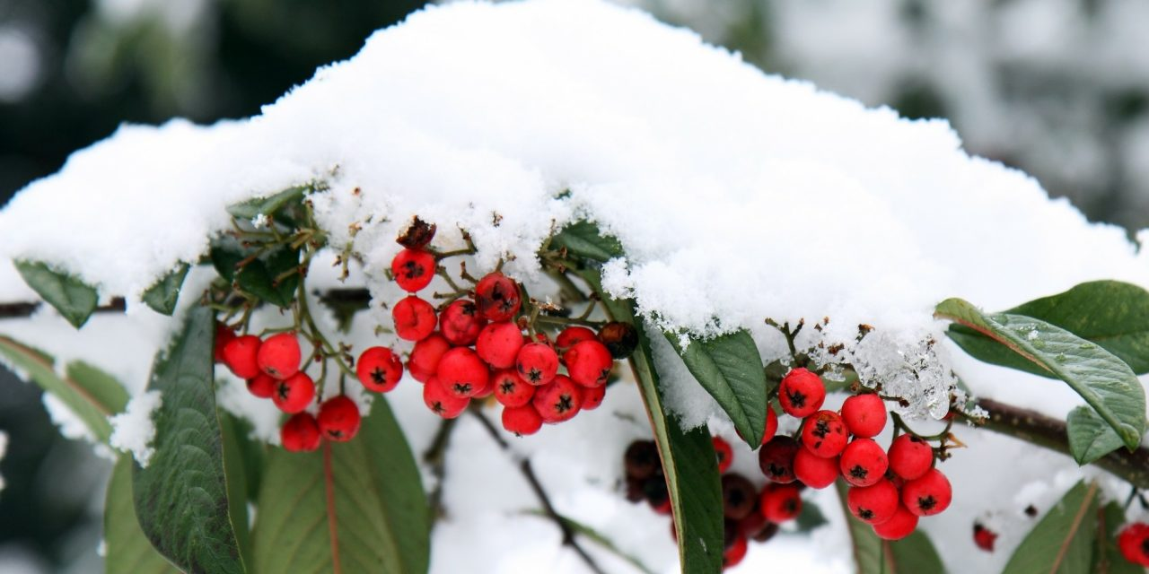 Timely Garden Tips For December