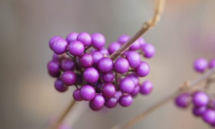 8 Shrubs To Brighten Your Winter Garden