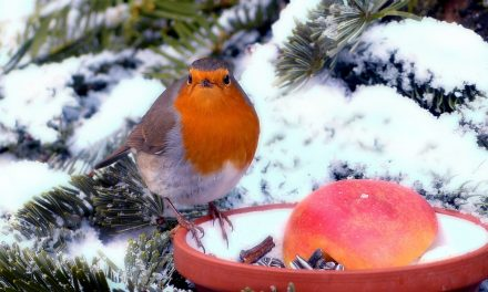 Create An Outdoor Christmas Tree For The Birds