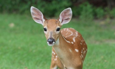 23 Really Interesting Plants Deer Do Not Eat