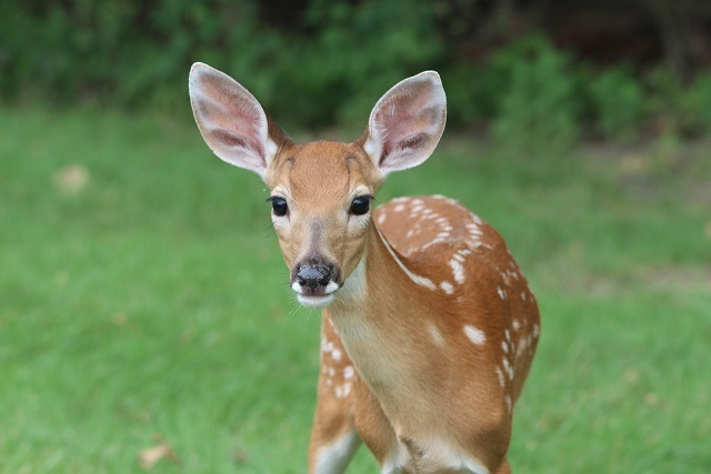 23 Really Interesting Plants Deer Do Not Eat I Rightplantz Com