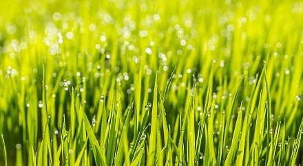 Early Spring Lawn Care Tips From The Pros