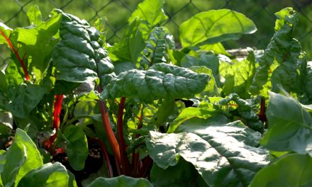 Leafy Greens To Grow This Year
