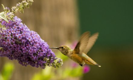 Plants To Attract Hummingbirds