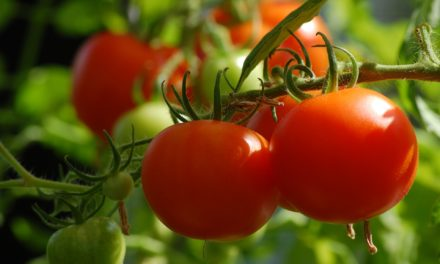 Grow Your Best Tomatoes Ever