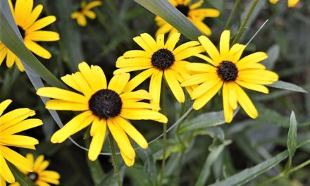 Colorful Summer Perennials For Your Sunny Garden