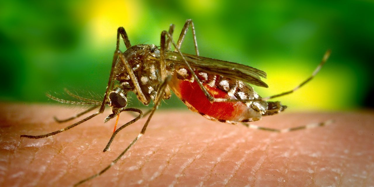 4 Ways To Naturally Combat Mosquitoes