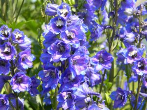 What to do in the Garden in August
