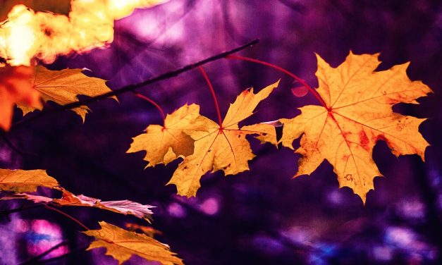 What To Do With Leaves This Fall (Besides Putting Them Out To The Curb)