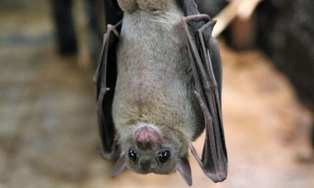 The Not-So-Spooky Truth About Bats