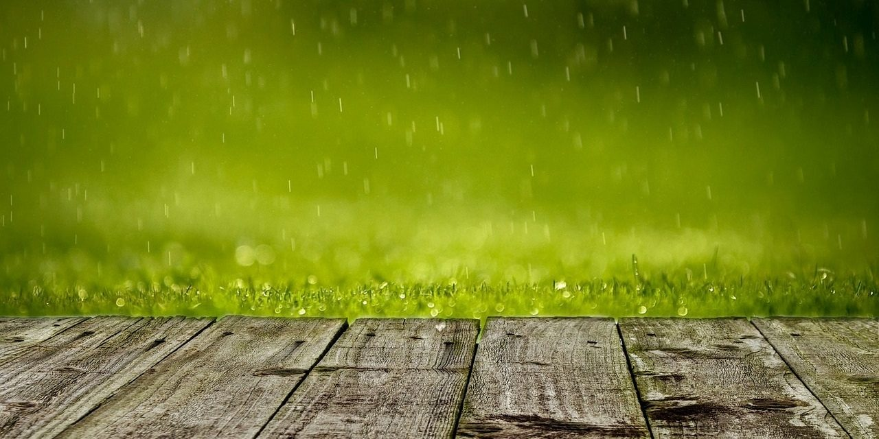 Is Too Much Rain Bad For Your Lawn and Gardens?