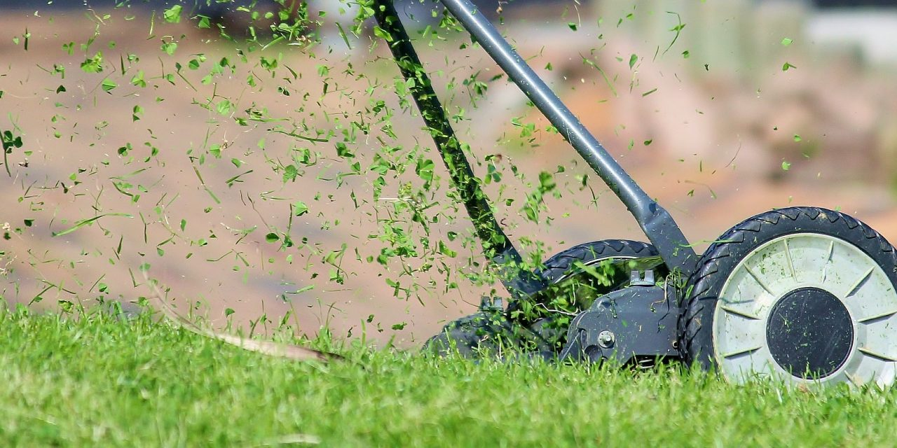 Summer Lawn Tips