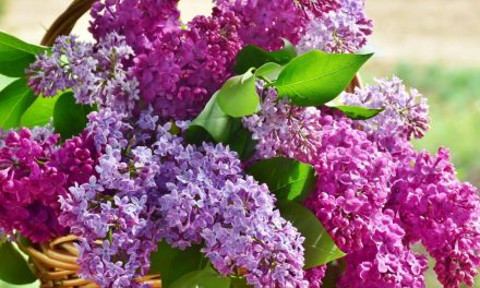9 Favorite Fragrant Garden Plants