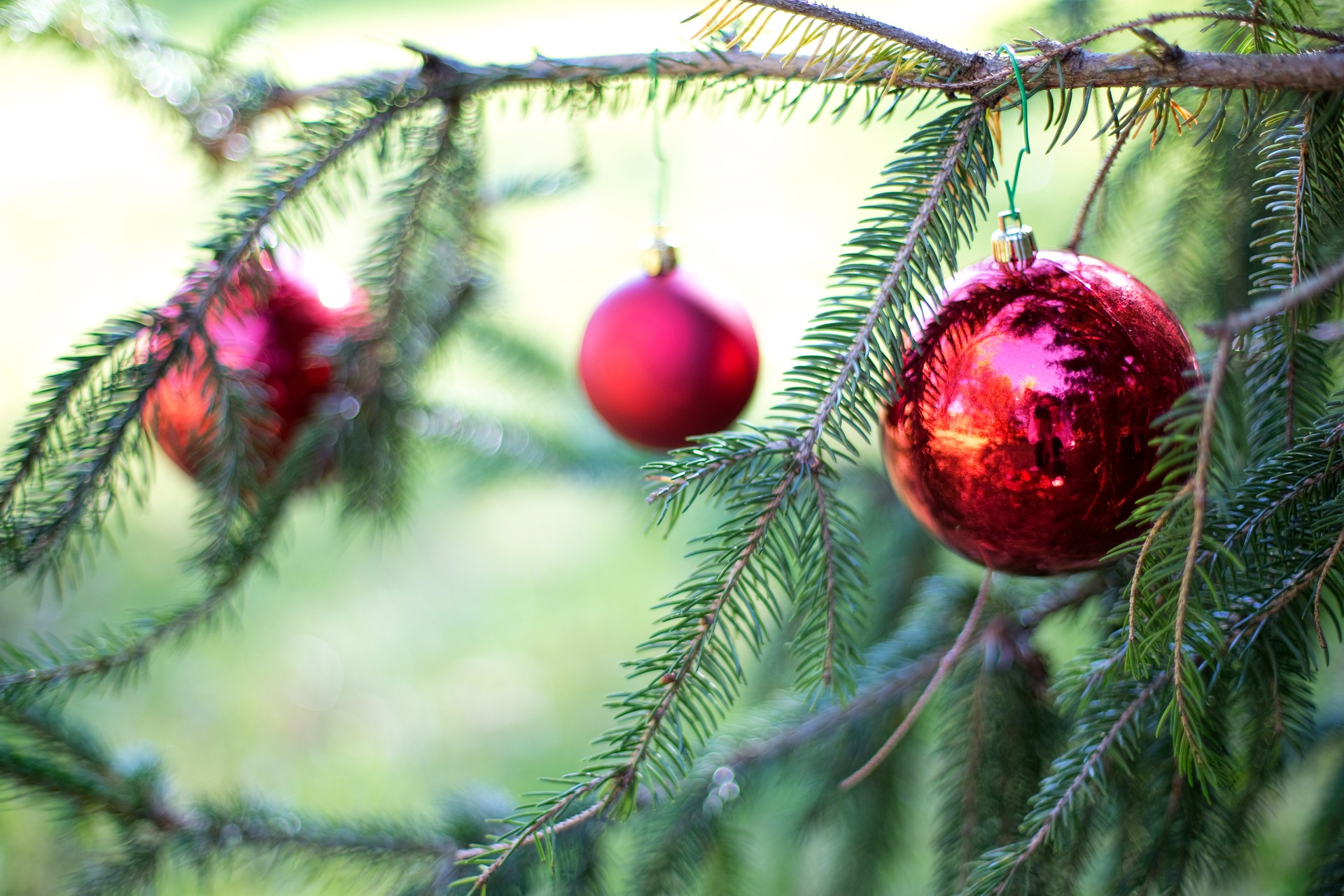Select And Care For Your Perfect Christmas Tree