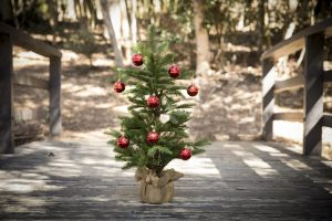RightPlantz: Select And Care For Your Christmas Tree