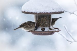 Four Rules For Attracting Birds In The Winter