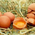 The Benefits Of Eggshells In The Garden