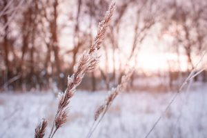 The Effects Of Snow On Garden Plants