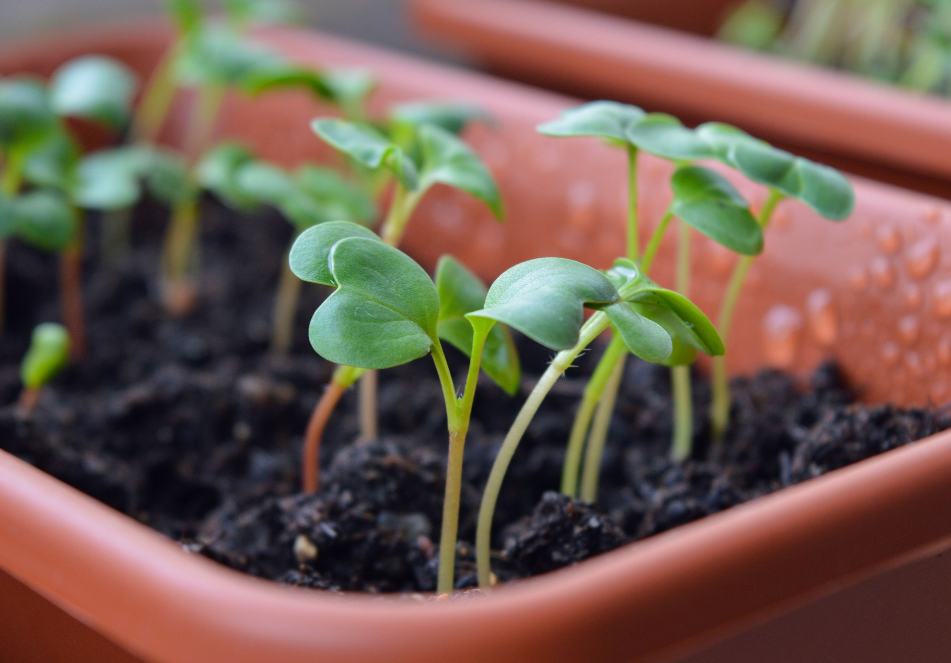 When To Plant Vegetable Seeds