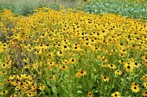 Common Questions About Caring For Your Summer Landscape