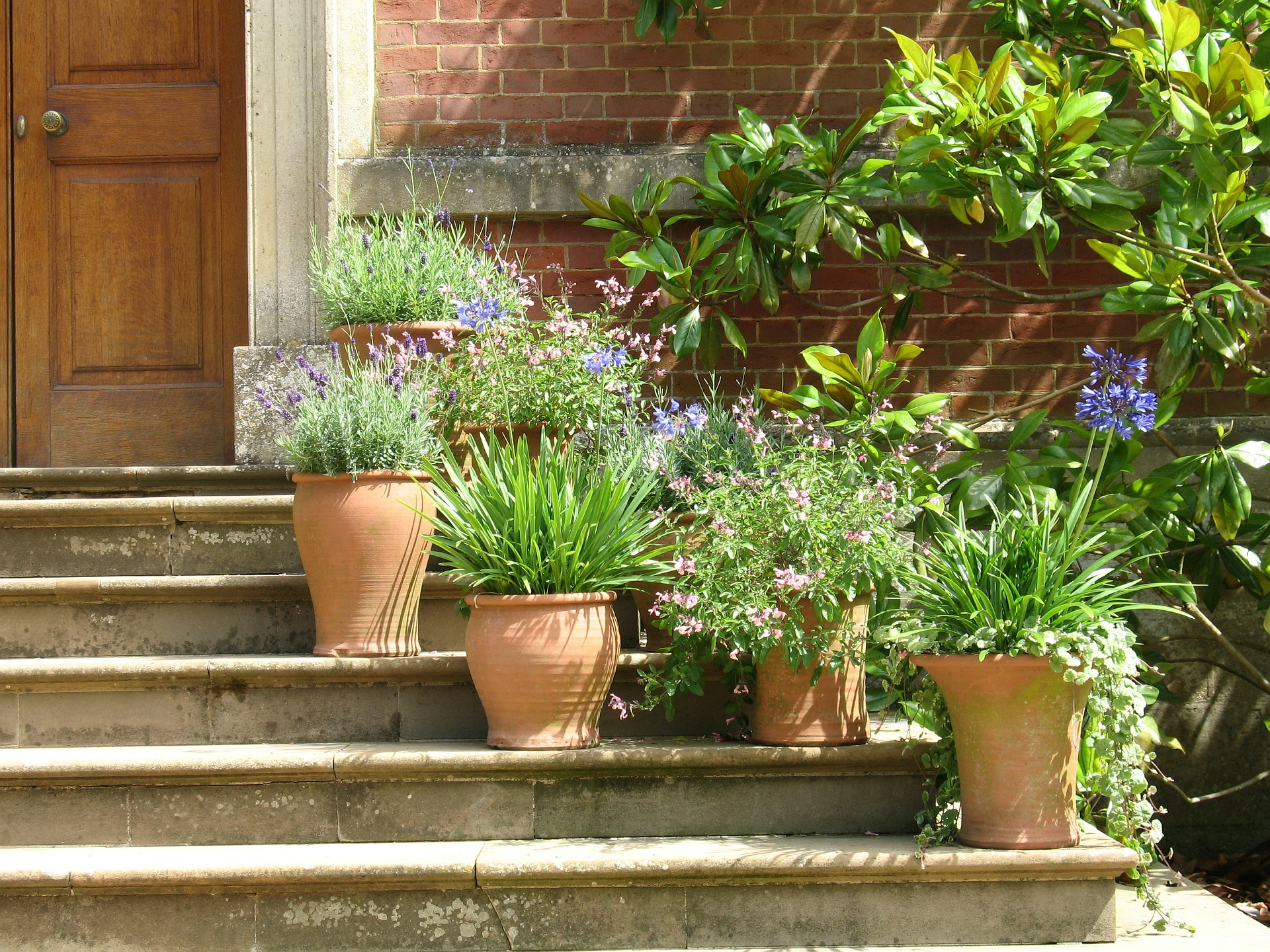 Top Tips For Successful Container Gardens