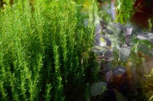 7 Herbs Every Gardener Should Plant- Thyme