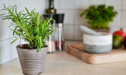7 Herbs Every Gardener Should Plant