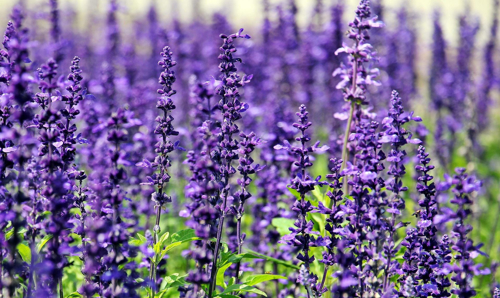 11 Cool, Blue Flowering Plants