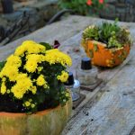 Make A Festive Fall Gourd Planter
