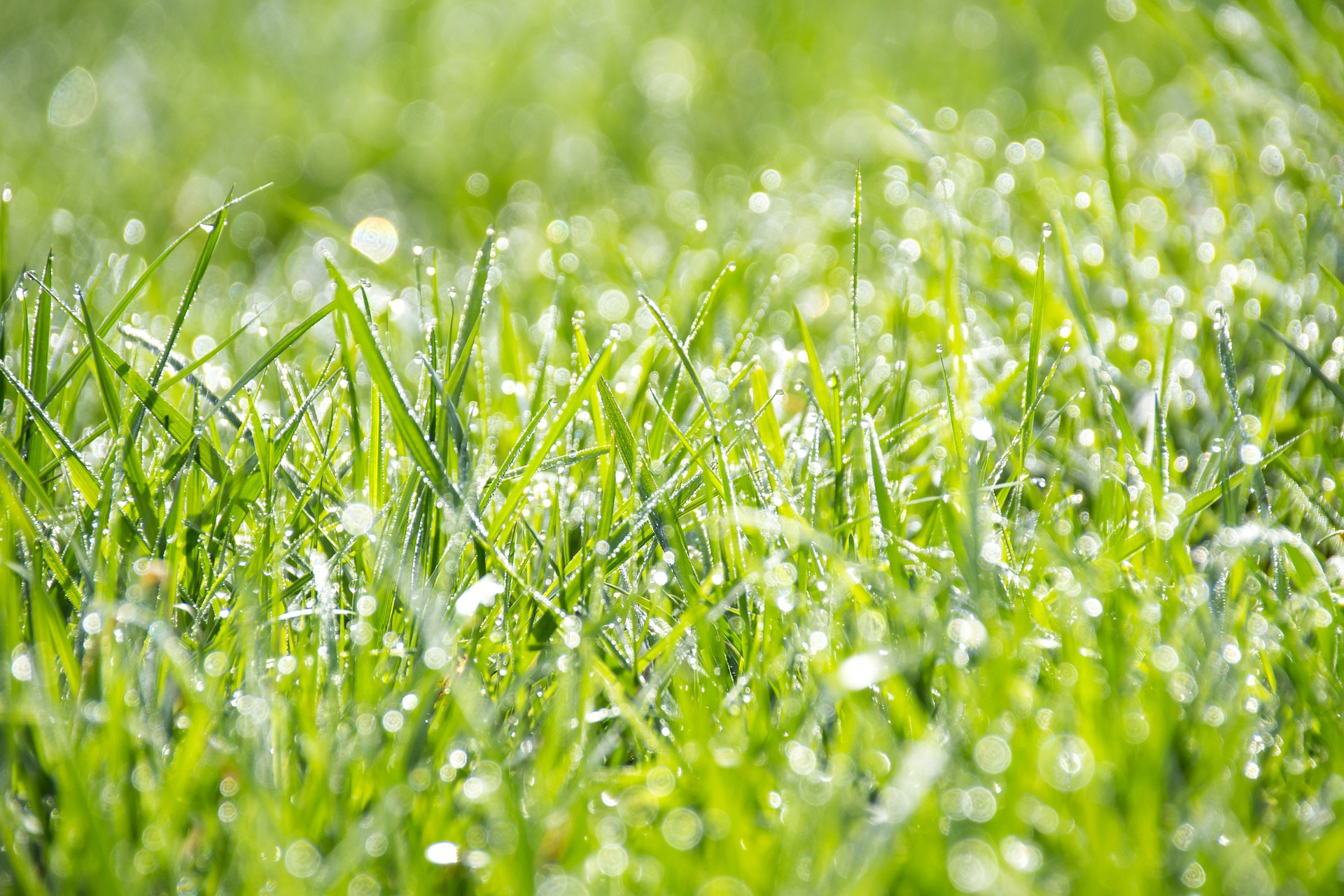 How Often Should I Water A Newly Overseeded Lawn?