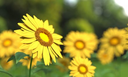 8 Yellow Flowering Perennials To Brighten Any Garden