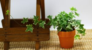 Plants That Boost Your Immune System- Houseplants