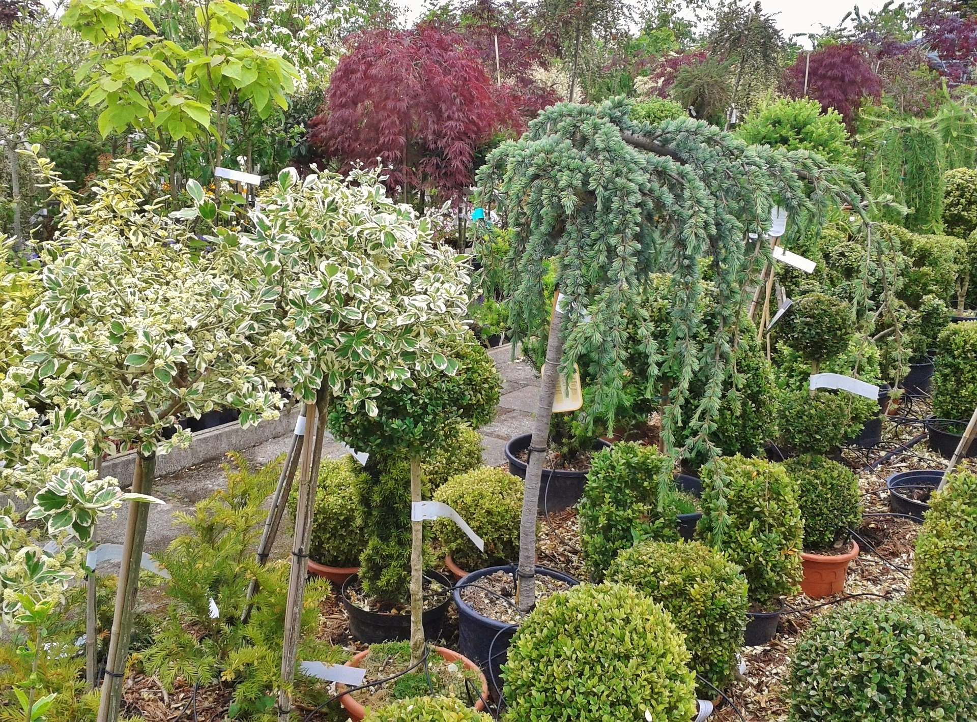 How To Care For New Shrubs And Trees