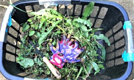 Adventures of a Novice Gardener