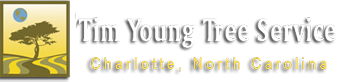 Tim Young Tree Service
