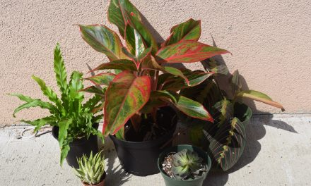Review of Ordering Online Plants From The Sill