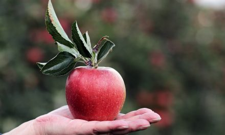 6 All-Time Favorite Apple Varieties