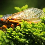 6 Things To Know About Cicadas and Gardening