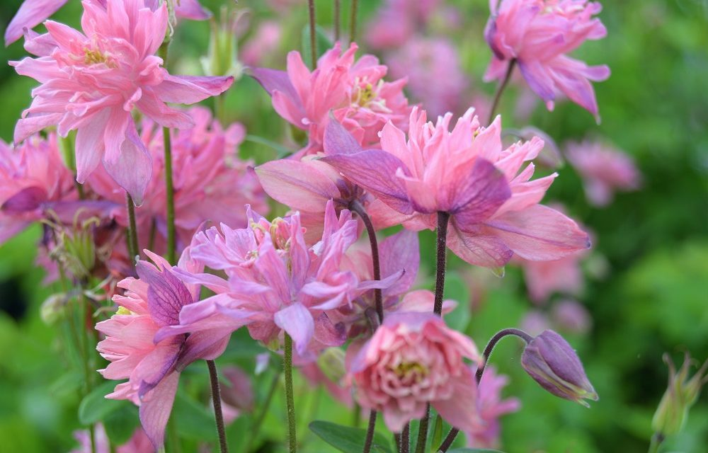 7 Really Hot Perennials That Bloom In Spring